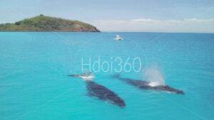 Photo de baleine par drone