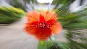 Communication visuelle florale